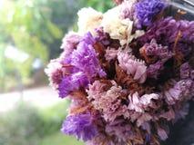 Bouquet sec de fleurs Image libre de droits