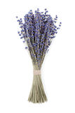 Bouquet sec de lavande d'isolement sur le fond blanc Photographie stock libre de droits