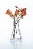 Bouquet sec de roses Images libres de droits