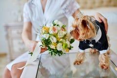 Bouquet sentant de marié de costume de chien dans des mains de jeune mariée Photo libre de droits