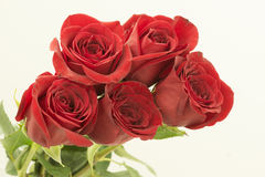 Bouquet of several red roses horizontal. On the white background several red roses with all of its buds looking from left side to the right side  together. the Stock Images