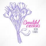 Bouquet of sketch crocuses Stock Image