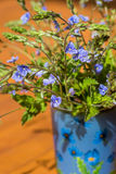 Bouquet of small blue wild flowers Veronica armena Stock Photography