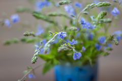 Bouquet of small blue wild flowers Veronica armena, selective focus Stock Photos