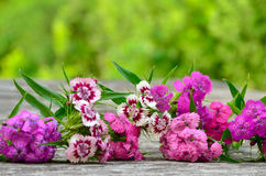 Bouquet of small carnations on a wooden background Stock Image