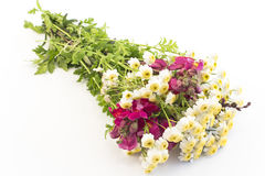 Bouquet of Small Daisies and Snapdragon Royalty Free Stock Photography
