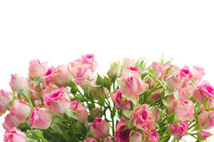Bouquet of small pink roses Stock Photos