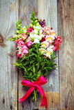 Bouquet of snapdragon (Antirrhinum majus) on vintage wooden boar Royalty Free Stock Photo