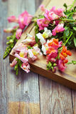 Bouquet of snapdragon (Antirrhinum majus) on vintage wooden boar Stock Image