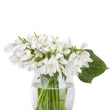 Bouquet of snowdrop flowers in basket  isolated on white backgro Royalty Free Stock Images