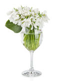 Bouquet of snowdrop flowers in glass vase, isolated on white Royalty Free Stock Photography