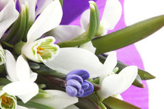 Bouquet of snowdrops Royalty Free Stock Image