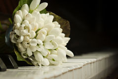 Bouquet of snowdrops Royalty Free Stock Photography