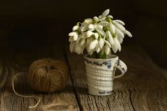 Bouquet of snowdrops flowers  in a glass vase. Royalty Free Stock Photo