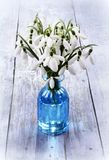 Bouquet of snowdrops flowers in a vase Royalty Free Stock Photos