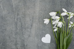 Bouquet of snowdrops on gray stone  background with copy space f Stock Image