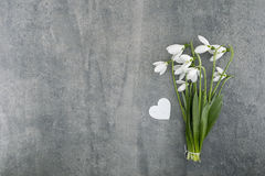 Bouquet of snowdrops on gray stone  background with copy space f Royalty Free Stock Photos