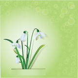 Bouquet of snowdrops Stock Photography