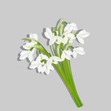 Bouquet of snowdrops Stock Images