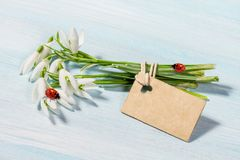 Bouquet of snowdrops  with a ladybug. Bouquet of snowdrops on a table with a ladybug Royalty Free Stock Image