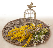 Bouquet of snowdrops and mimosa on a wicker circle Stock Photography