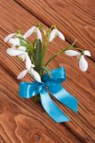 Bouquet of snowdrops tied a blue ribbon Royalty Free Stock Images