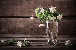 Bouquet of snowdrops Stock Photos