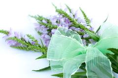 Bouquet of speedwell with bow. Bouquet of speedwell with green bow Stock Images