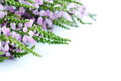 Bouquet of speedwell on white surface Stock Photo