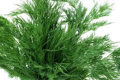 Bouquet of sprigs of fresh dill Royalty Free Stock Photos