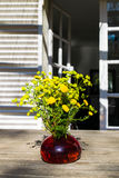 Bouquet of spring beautiful fresh field yellow flowers tansy in the red glass vase on the wooden table in the garden. Tanacetum flowering plant royalty free stock image