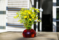 Bouquet of spring beautiful fresh field yellow flowers tansy in the red glass vase on the wooden table in the garden Royalty Free Stock Images