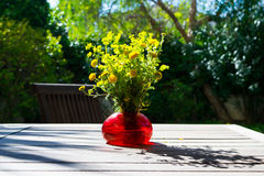 Bouquet of spring beautiful fresh field yellow flowers tansy in the red glass vase on the wooden table in the garden, tanacetum fl. Bouquet of spring beautiful royalty free stock image