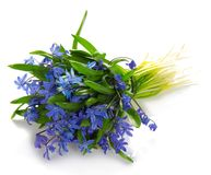 The bouquet of spring blue flowers Stock Photo