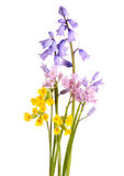 Bouquet of spring flowers Royalty Free Stock Photo