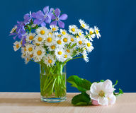 A bouquet of spring flowers Royalty Free Stock Photos