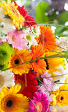 A bouquet of spring flowers Stock Photography