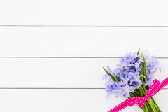 Bouquet of spring flowers decorated with pink ribbon on white wooden background. Chionodoxa flowers. Royalty Free Stock Photography
