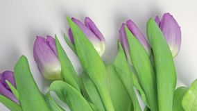 Bouquet of spring flowers, lilac tulips on white background close up - 8 march, Valentine day or mother`s day holiday. Concept stock footage