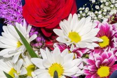Bouquet of spring flowers macro Royalty Free Stock Photo