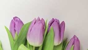 Bouquet of spring flowers, pink tulips on white background close up - 8 march, Valentine day or mother`s day holiday. Concept stock footage