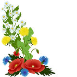 Bouquet spring flowers. Poppies, cornflowers, daisies and dandelions with leaves  on white background, vector illustration Royalty Free Stock Images