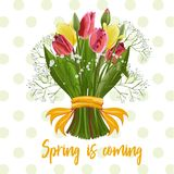 Bouquet of spring flowers royalty free illustration