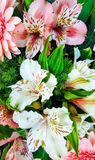 Bouquet of spring flowers - white and pink Alstroemeria and gerberas Royalty Free Stock Photography