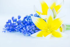 Bouquet of spring flowers Royalty Free Stock Photos