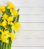 Bouquet of spring narcissus flowers Stock Photography