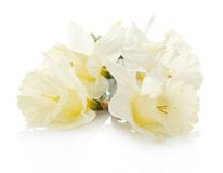 Bouquet of the spring narcissuses Stock Photography