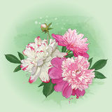 A bouquet of spring peonies for greeting card. Vector greeting card with bouquet of spring flowers peonies Royalty Free Stock Images