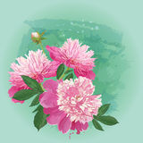 A bouquet of spring pink peonies for greeting card. Vector greeting card with bouquet of pink spring flowers peonies Royalty Free Stock Photography