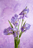 Bouquet of spring purple Irises Royalty Free Stock Images